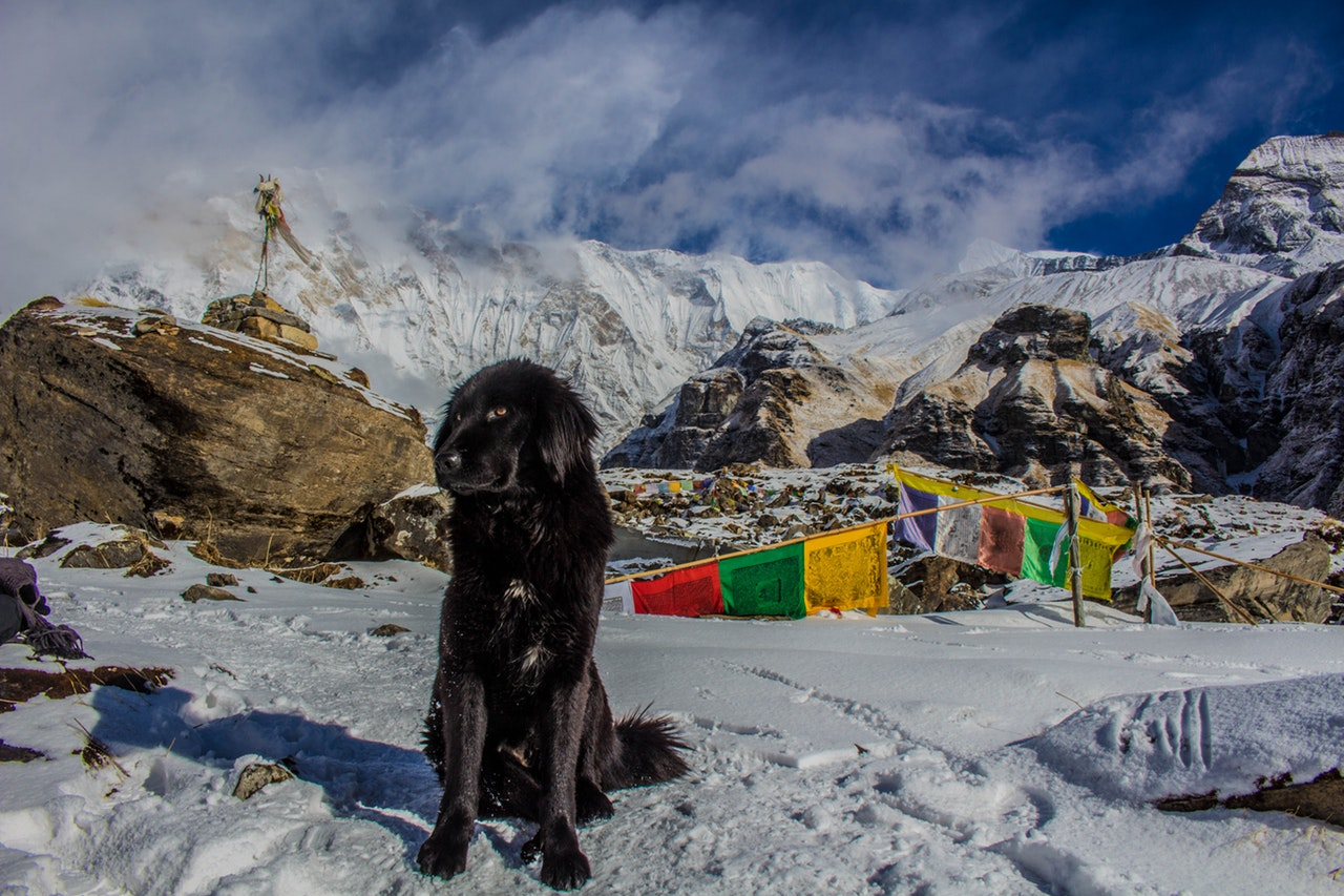 Svart hund i fjellet